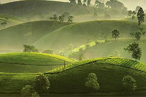 Hiệp hội Chè Việt Nam: Điểm tựa vững chắc cho doanh nghiệp ngành chè