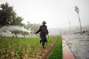Gói thầu Chăm sóc cây xanh tại Nghệ An: HSMT hạn chế cạnh tranh