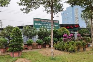 Hà Tĩnh: Đất xây thư viện thành nơi bán cây cảnh