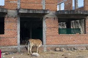 Ninh Thuận: Dự án nghìn tỷ thành bãi chăn bò