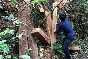 Quảng Bình: Phát hiện hai vụ phá rừng nghiêm trọng