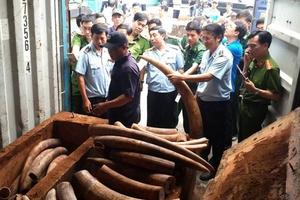 Những vụ buôn lậu ngà voi nổi tiếng