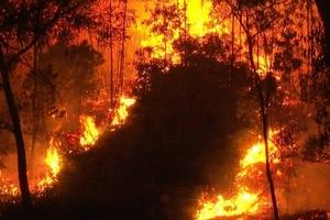 Xảy ra cháy rừng trên diện rộng tại Bắc Giang