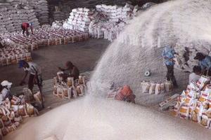 Doanh nghiệp phân phối gạo lớn nhất nước Úc thâu tóm nhà máy chế biến gạo của Việt Nam