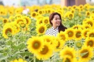 Vườn hoa hướng dương hơn 500.000 cây vừa xuất hiện ở Sài Gòn khiến người thành phố miệt mài check -in