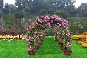 Vườn hoa hồng được công nhận lớn nhất Việt Nam