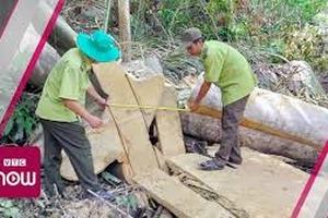 Triệt hạ rừng quy mô lớn tại Phú Yên