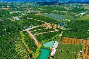 Khẩn trương rà soát pháp lý của 19 dự án đất nền tại Lâm Đồng