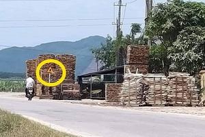 Thừa Thiên Huế: Điểm tập kết gỗ tiềm ẩn tai nạn giao thông