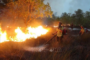 Cháy hơn 15 ha rừng phòng hộ ven biển Quảng Bình