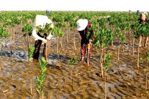 Gói thầu trồng rừng ngập mặn ở Thanh Hóa: Kết luận không đạt nhưng vẫn trúng thầu là do lỗi đánh máy