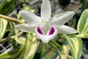 Nhóm đại gia Thái Bình chi 10 tỷ mua cây hoa phong lan: Lộ điểm 'đáng nghi'