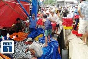 Ngư dân Huế không thờ ơ xuất khẩu hải sản