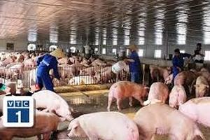 """Bắc Ninh: Mòn mỏi chờ hỗ trợ sau """"bão"""" tả lợn"""