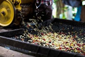 Giá cà phê hôm nay (5/10) bật tăng 400 đồng/kg, giá tiêu tăng tới 2.000 đồng/kg