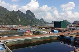 Cường Thịnh fish - tiên phong thương hiệu cá sông Đà