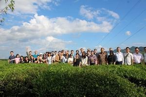 Tổng Công ty Chè Việt Nam - CTCP (Vinatea): Chè Mộc Châu vươn xa ra thị trường thế giới