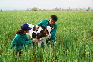 """Vinamilk liên doanh với doanh nghiệp Lào và Nhật Bản xây dựng """"Resort"""" bò sữa"""