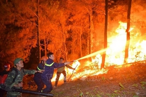 Cháy rừng ở các tỉnh miền Trung gây thiệt hại trên 100 ha rừng