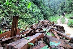 Bắt giữ 5 đối tượng vây chém cán bộ kiểm lâm tại Đắk Lắk