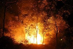 Cháy rừng trong đêm ở Điện Biên, huy động hàng trăm người dập lửa