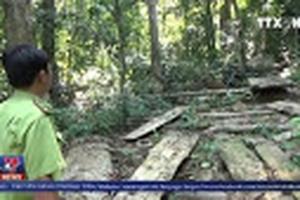 Quảng Ngãi yêu cầu xử lý nghiêm vụ phá rừng phòng hộ
