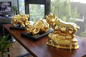Heo vàng dát vàng hút khách dịp tết Kỷ Hợi
