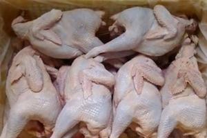 Thực chất những con gà siêu rẻ được bầy bán trên vỉa hè Tp.HCM