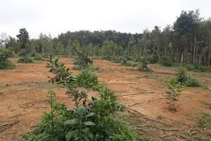 Hà Tĩnh: Xã bán đất cho dân, 15 năm sau vẫn chưa cấp sổ đỏ