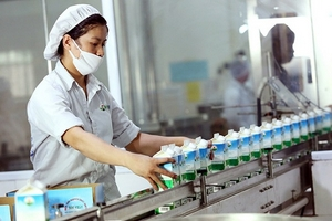 Chăn nuôi bò sữa: Nông dân Mộc Châu thành triệu phú