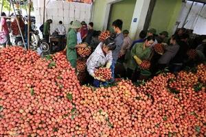 Kết thúc vụ vải thiều, Bắc Giang thu về gần 6.000 tỷ đồng