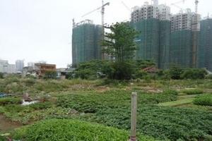 """Thủ tướng yêu cầu nghiên cứu ý kiến của GS Đặng Hùng Võ về xử lý dự án """"treo"""""""