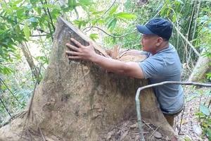 Huyện A Lưới Thừa Thiên - Huế: Rừng bị tàn phá!