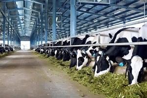 Vinamilk dự kiến đầu tư dự án nuôi bò sữa và bò thịt với tổng mức đầu tư 1.200 tỷ đồng tại Hà Tĩnh