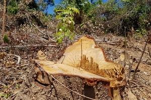 Phá rừng ở Quảng Trạch, Quảng Bình: Hậu quả nặng nề, trách nhiệm thuộc về ai?