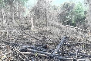 Lấn chiếm cả ngàn héc ta rừng ở Quảng Trị