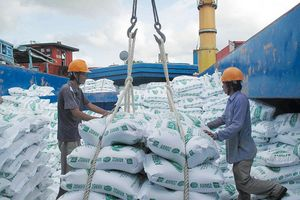 """VDSC: Cơ hội tăng trưởng của các công ty sản xuất gạo """"chuyên nghiệp"""""""
