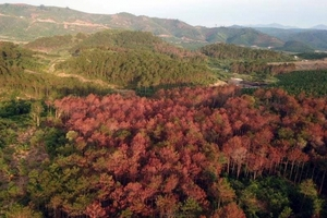 Vụ phá 10 ha rừng thông ở Lâm Đồng: Tóm kẻ chủ mưu khi đang lẩn trốn ở Lào