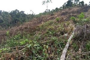 Nghệ An: Điều tra vụ việc Phó Chủ tịch xã phá 2,4 ha rừng