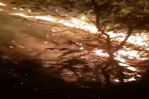 Cháy rừng ở Động Tù Và