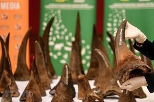 Bàn giao 55 mẫu vật giám định sừng tê giác bị tịch thu tại Nội Bài
