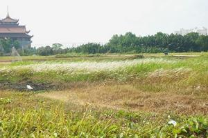 Loay hoay xử lý vi phạm về đất đai