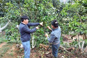 Huyện Thanh Thủy (Phú Thọ): Phát huy vai trò nêu gương của cán bộ, đảng viên tại xã Sơn Thủy