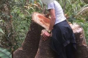 Kỷ luật cán bộ BQL rừng phòng hộ Ia Ly vì để xảy ra phá rừng