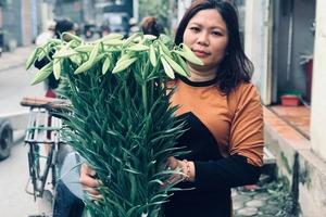 Hoa loa kèn nở sớm, người trồng trúng 'quả lớn'