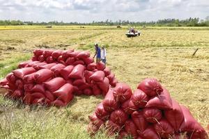 Vinafood II ký hợp đồng độc quyền gần 1 tỷ USD cung cấp gạo cho Philippines