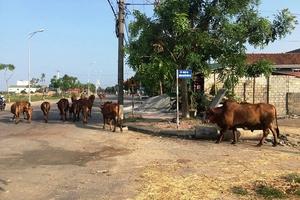 Hồng Lĩnh, Hà Tĩnh: Ô nhiễm môi trường do chăn nuôi
