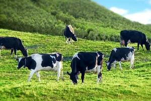 Ông chủ Sữa Mộc Châu đang làm ăn thế nào?