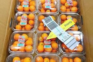Quất Nhật hai triệu/kg: Dân Việt mua làm mứt Tết đãi khách