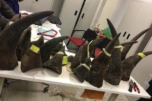 Tổng cục Hải quan bắt giữ 102kg sừng tê giác